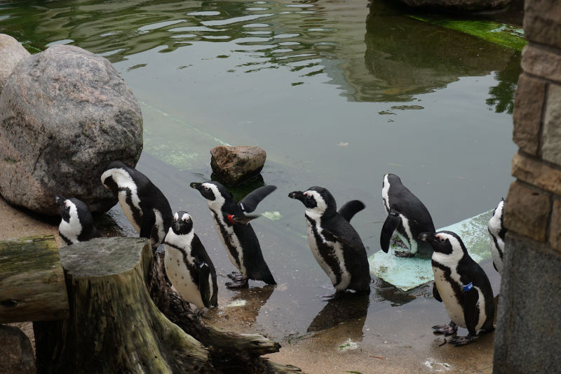 Leipzig Zoo – my personal highlight in Leipzig!