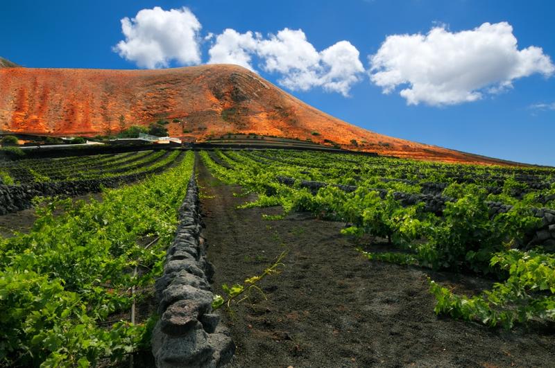 Wine-growing on Lanzarote – La Geria