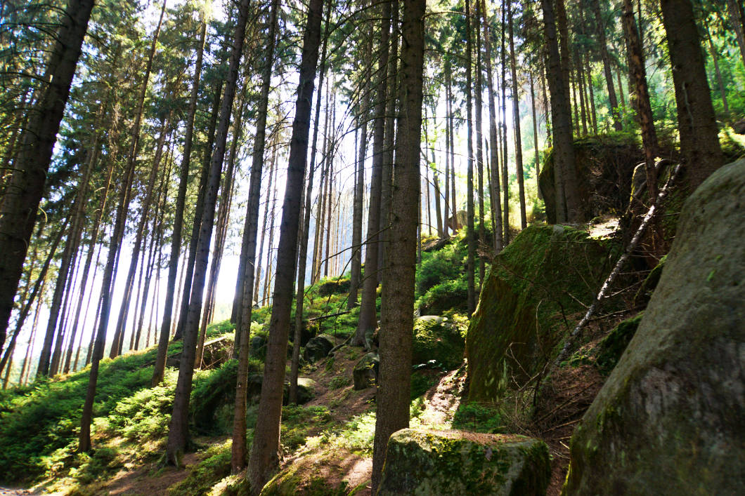 Hiking Bad Schandau