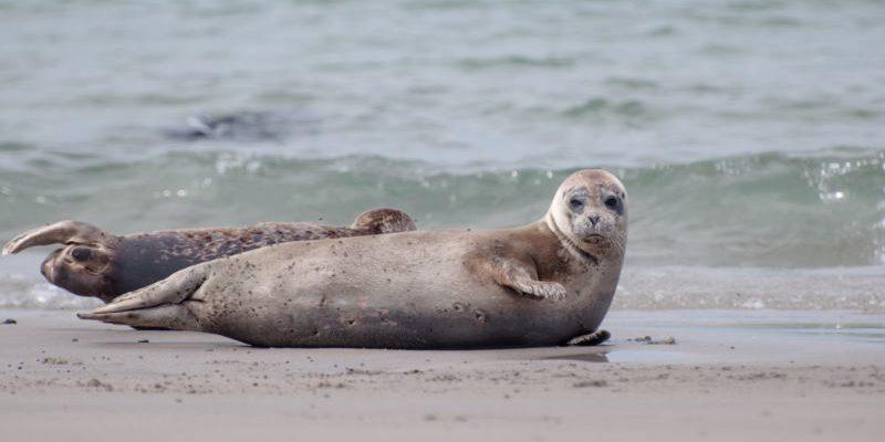 Seal rescue centre Friedrichskoog