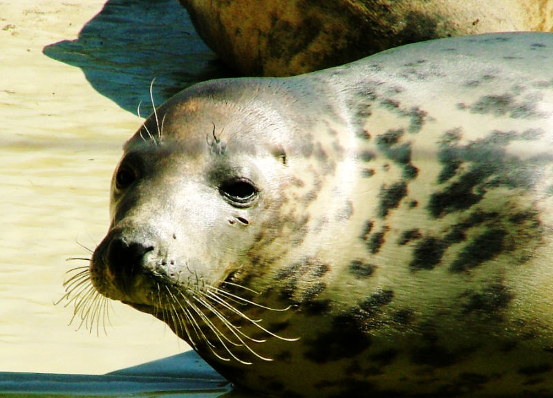Seal rescue centre Friedrichskoog