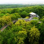 High above the trees – out and about on the canopy path in the National Park Hainich